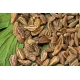 Pimpinella anisum / Anis, Matalauva 150 semillas