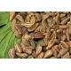 Pimpinella anisum / Anise 150 seeds