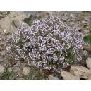 Thymus vulgaris / Tomillo 100 semillas