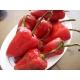 Piquillo pepper seeds - Capsicum annuum 40 seeds