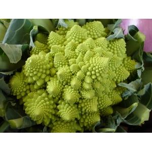 "Brocoli ""Romanesco Natalino"" (brassica oleracea botrytis)  30 semillas"