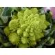 "Brocoli ""Romanesco Natalino"" (Brassica oleracea botrytis) 30 graines"