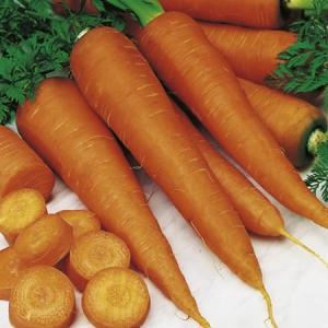 Orange carrot 'Saint Valery' (Daucus Carota) 200 graines