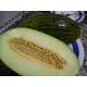 Santa Claus melon Piel de sapo seeds - Cucumis melo 40 seeds