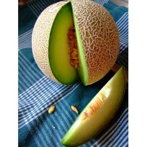 Melon Galia - Cucumis melo 40 seeds