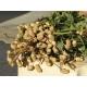 Cacahuete, Maní (Arachis hypogaea) 13 semillas