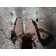 Chumbera, Nopal, Tuna - Opuntia ficus-indica 1 planta 10-20 cm