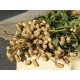Arachide (Arachis hypogaea) 1kg graines