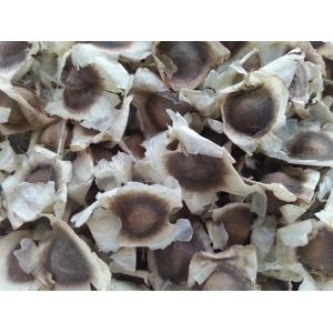 Moringa - Moringa oleifera 25 graines