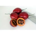Tamarillo, tomate de árbol / Solanum betaceum 35 semillas