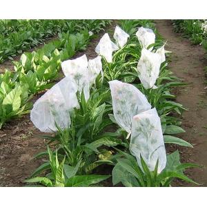 LITTLE DUTCH tabaco (nicotiana tabacum) 500 semillas