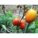 Solanum lycopersicum / Tomate Roma 100 semillas