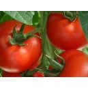Tomate 3 Cantos / Lycopersicon lycopersicum 100 Seeds