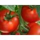 Tomate 3 Cantos / Solanum lycopersicum L. 100 graines