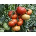 Solanum lycopersicum / Tomate Marmade 100 Semillas