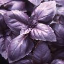 Albahaca morada 'red rubin' 50 semillas